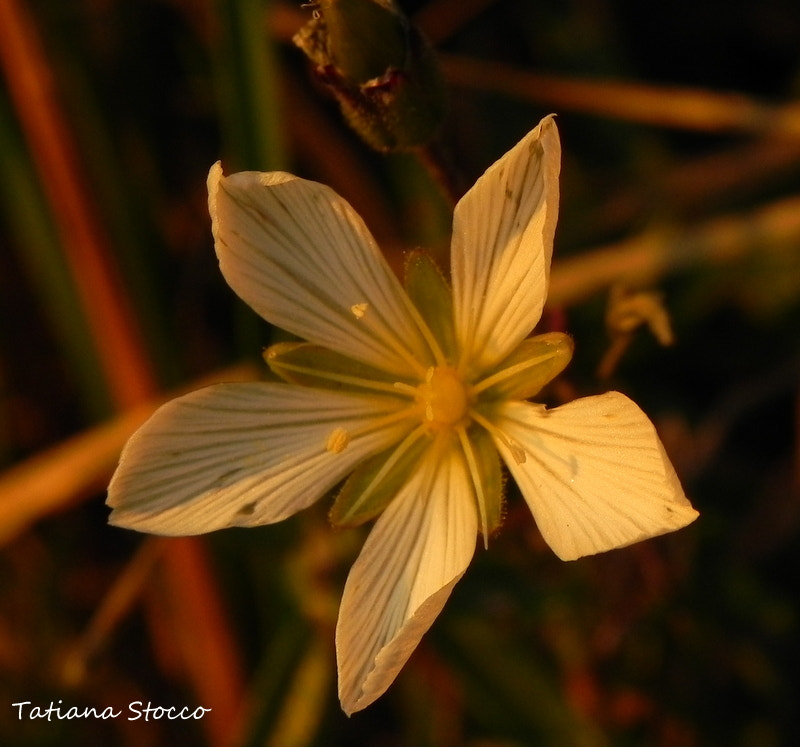 Photograph FLOWER IN AUTUMN by  Stocco on 500px