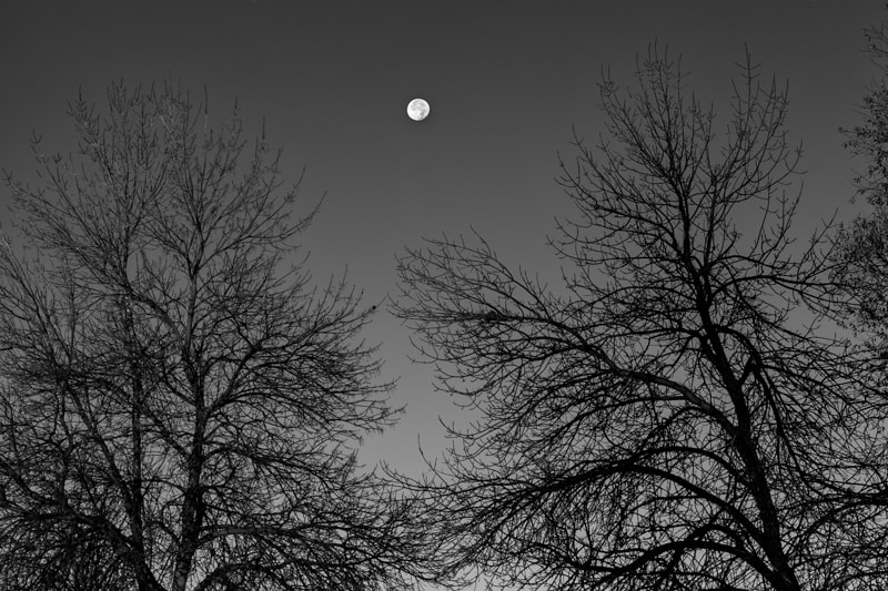 Photograph Moon over Trees by Ken Ford on 500px