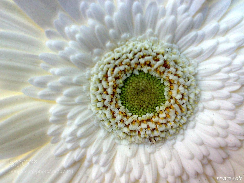 Photograph White by Sathya Narayana on 500px