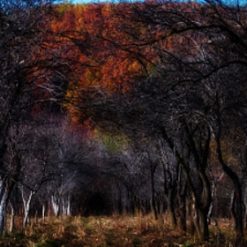 Autumn2 by Olivia Dodon (olivia_dodon)) on 500px.com