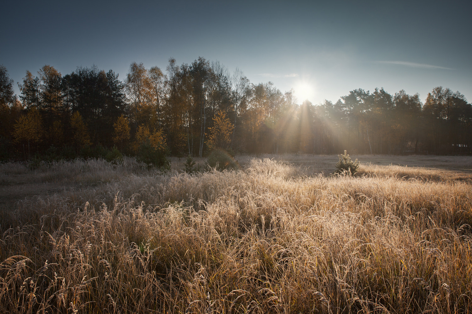 Photograph Frosty Sunrise by Steffen Egly on 500px