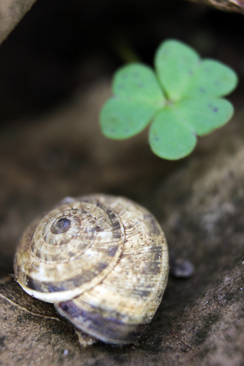 Photograph Clover and Shell by Noyan Keskin on 500px