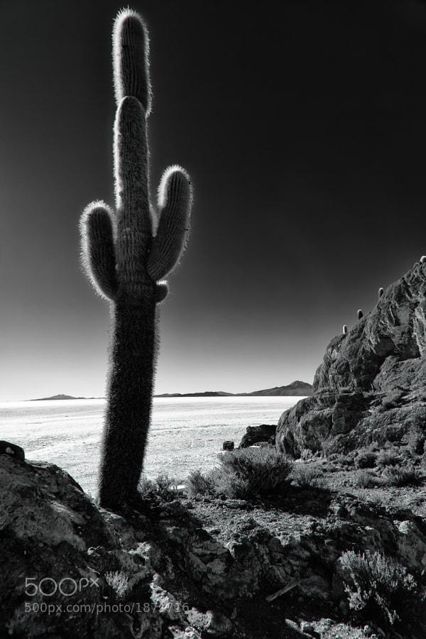 Cactus by carlos restrepo (carlosrestrepo) on 500px.com