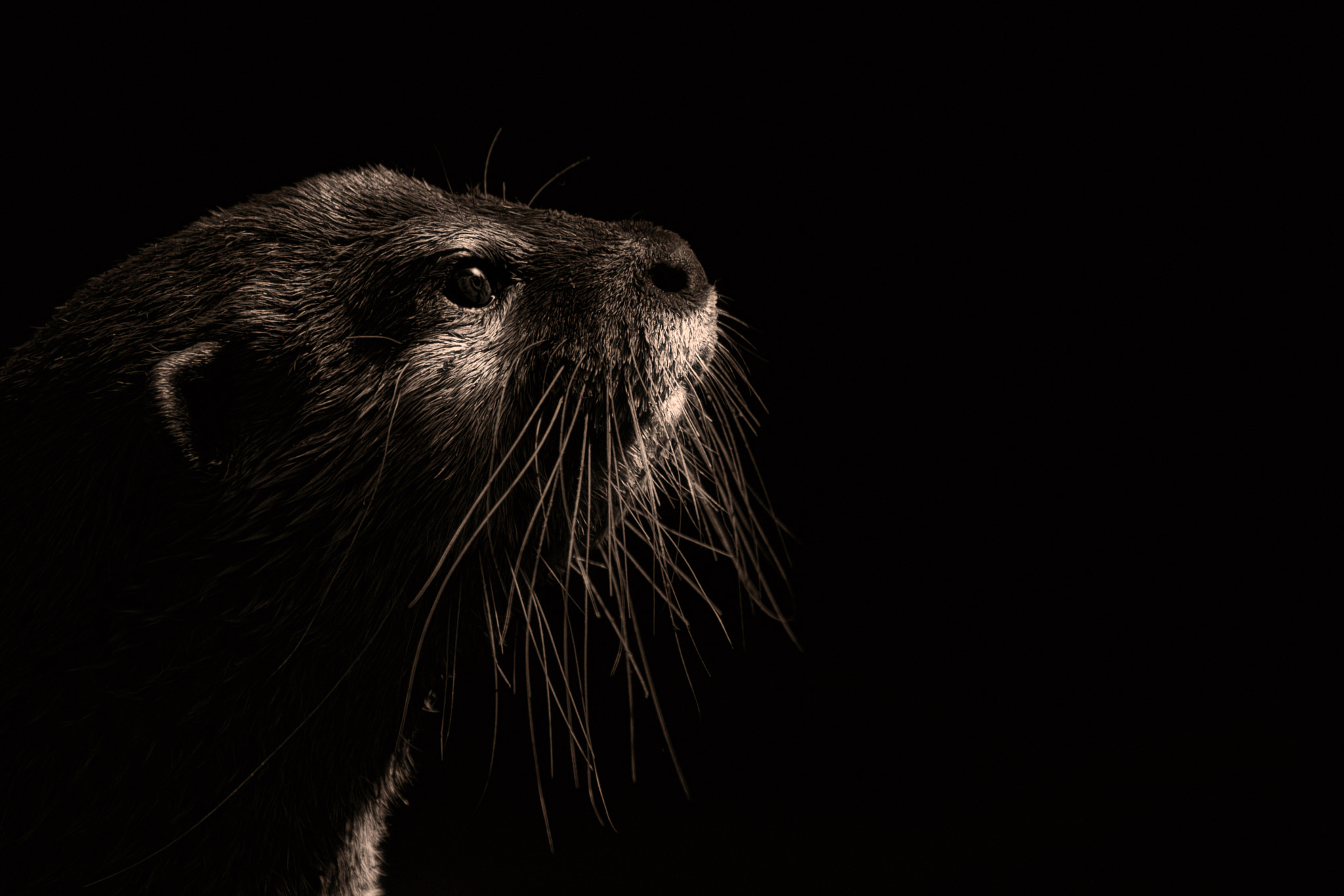 Photograph The Otter ! by Denis Van Linden on 500px
