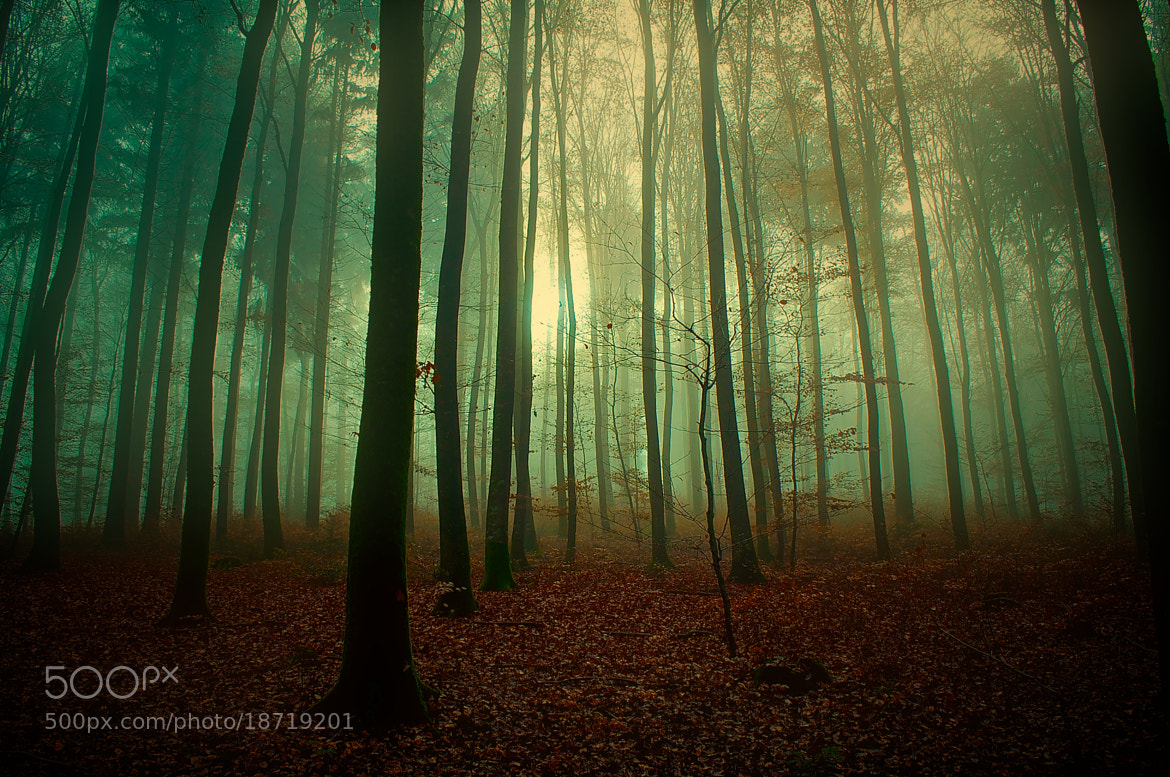 Photograph Forest N°10 by Chris W. on 500px