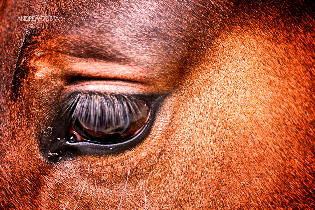 Photograph Eye by Andrea Costa on 500px