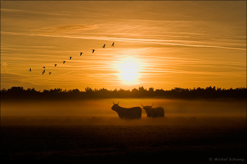 Photograph Moving Out by Michel Schamp on 500px