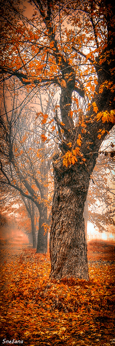 Photograph One foggy morning ... by mmmrvica :) on 500px