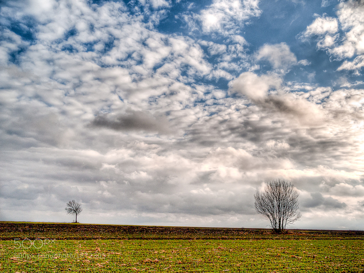 Photograph Two trees, somewhere in Poland by Adam Kraska on 500px
