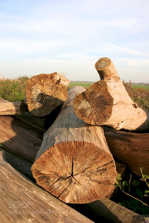 Photograph Old wood by Mark van der Sluis on 500px