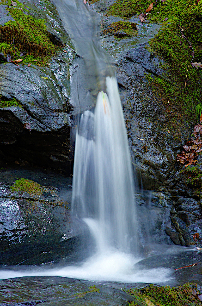 Photograph LiL color with that fall.. by Jesse Brown on 500px