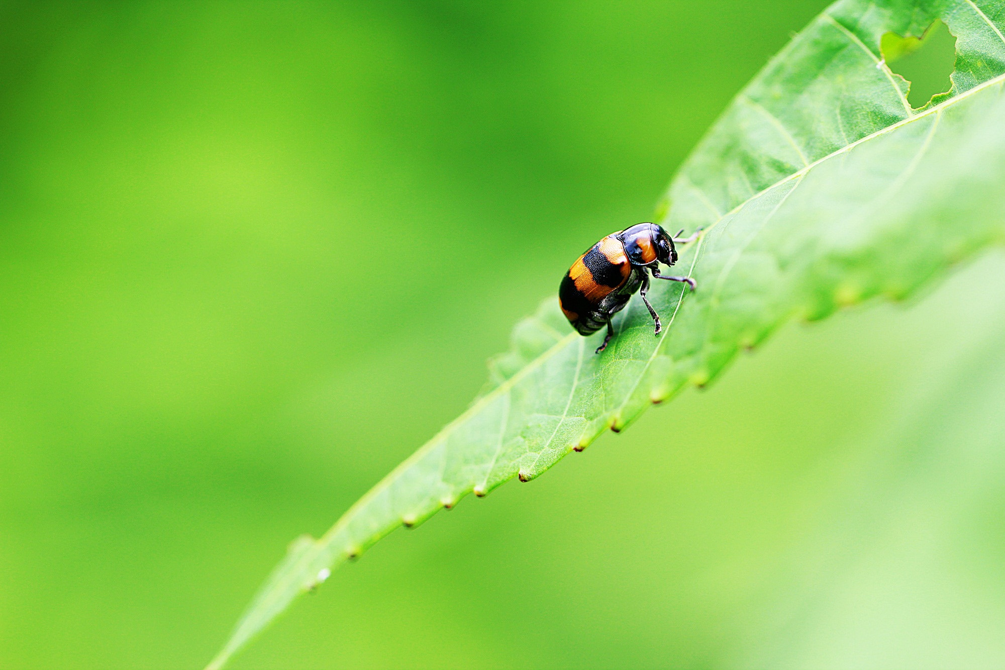 Photograph lonely bug by musato - on 500px
