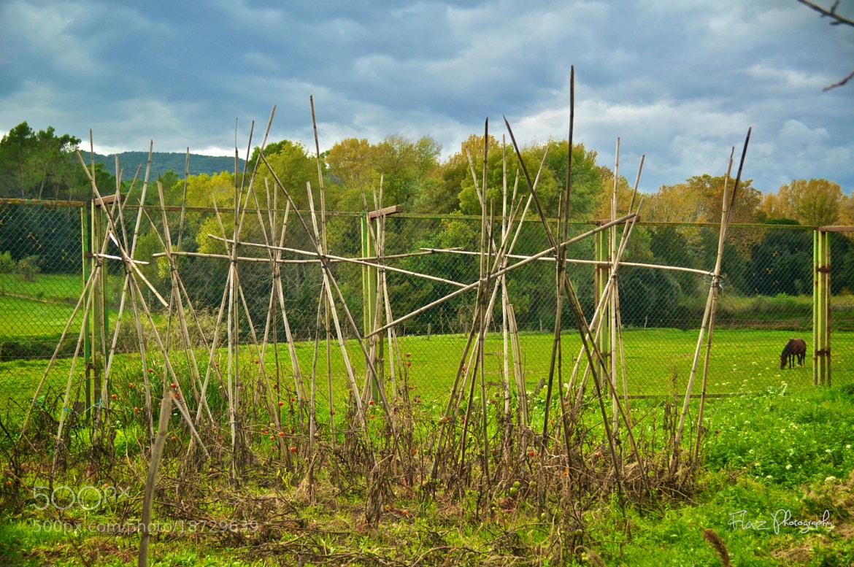 Photograph Green by Florencia Azambuja on 500px