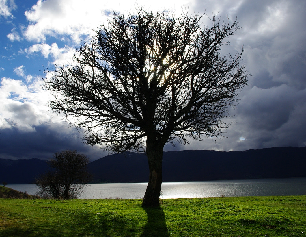 Photograph tree of life by N Dalavagas on 500px