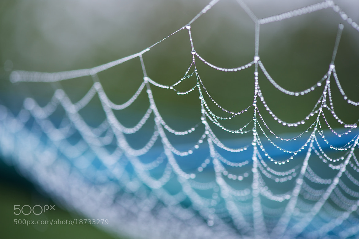 Photograph Natural necklaces by James Johnson on 500px