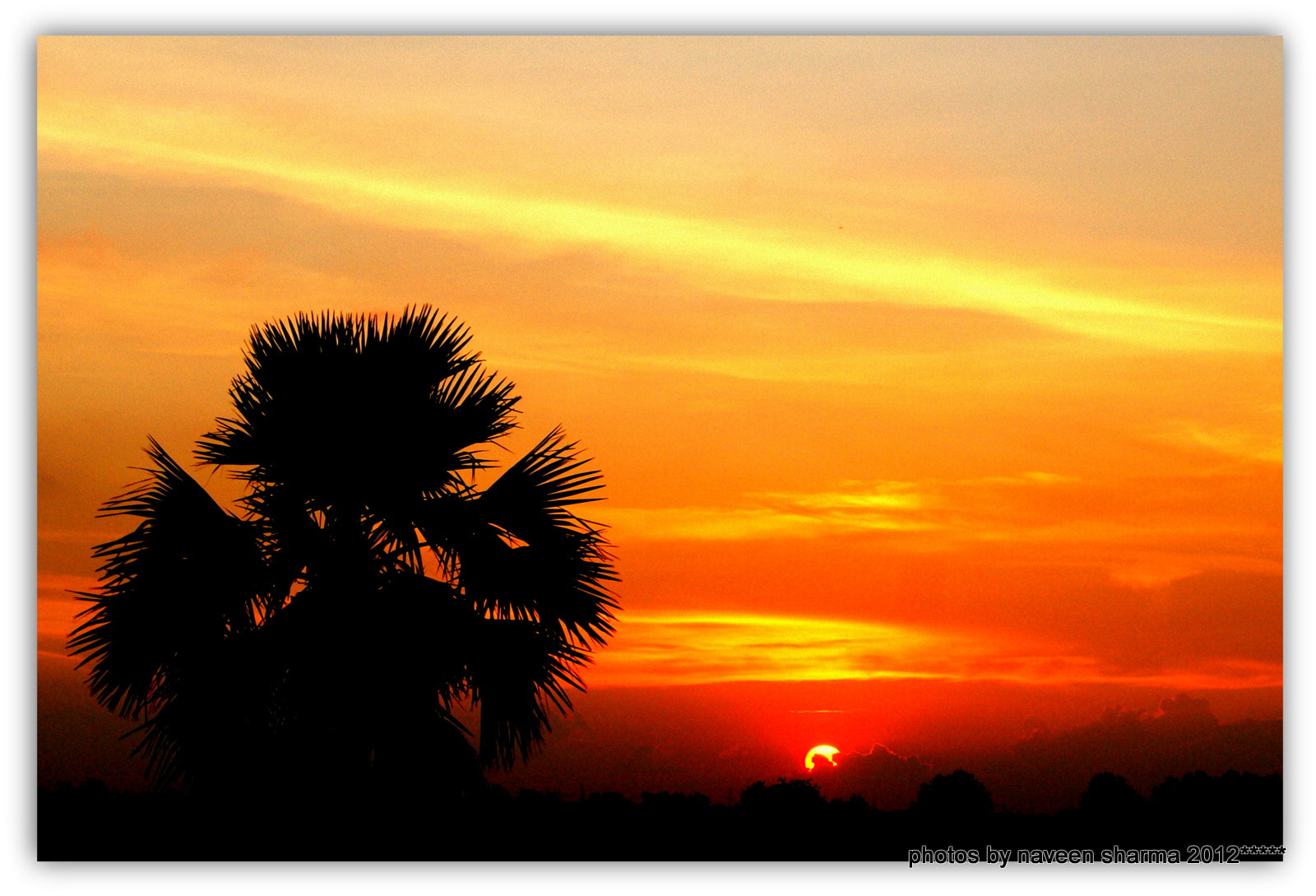 Photograph SUNSETTING B PALM TREE by naveen sharma on 500px