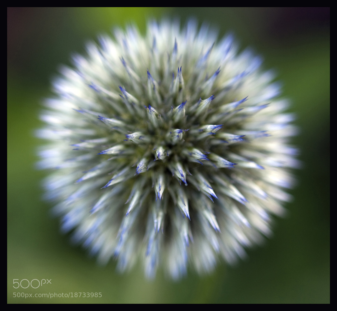 Photograph just the right spot by David Ottavio on 500px