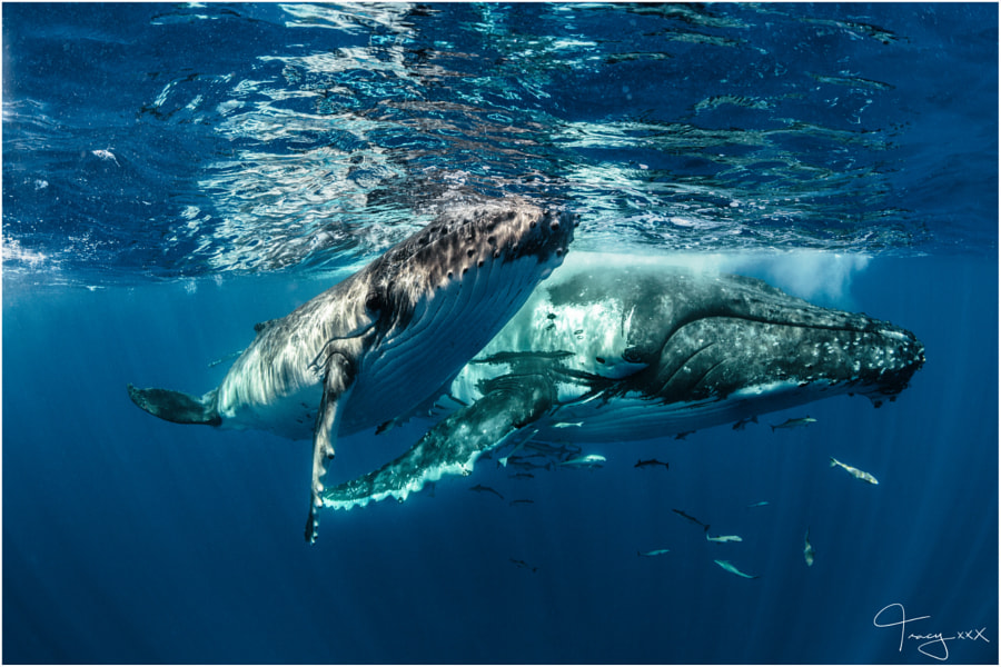 Mum & Calf by Tracy Olive on 500px.com
