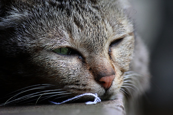 Photograph Lazy cat by musato - on 500px