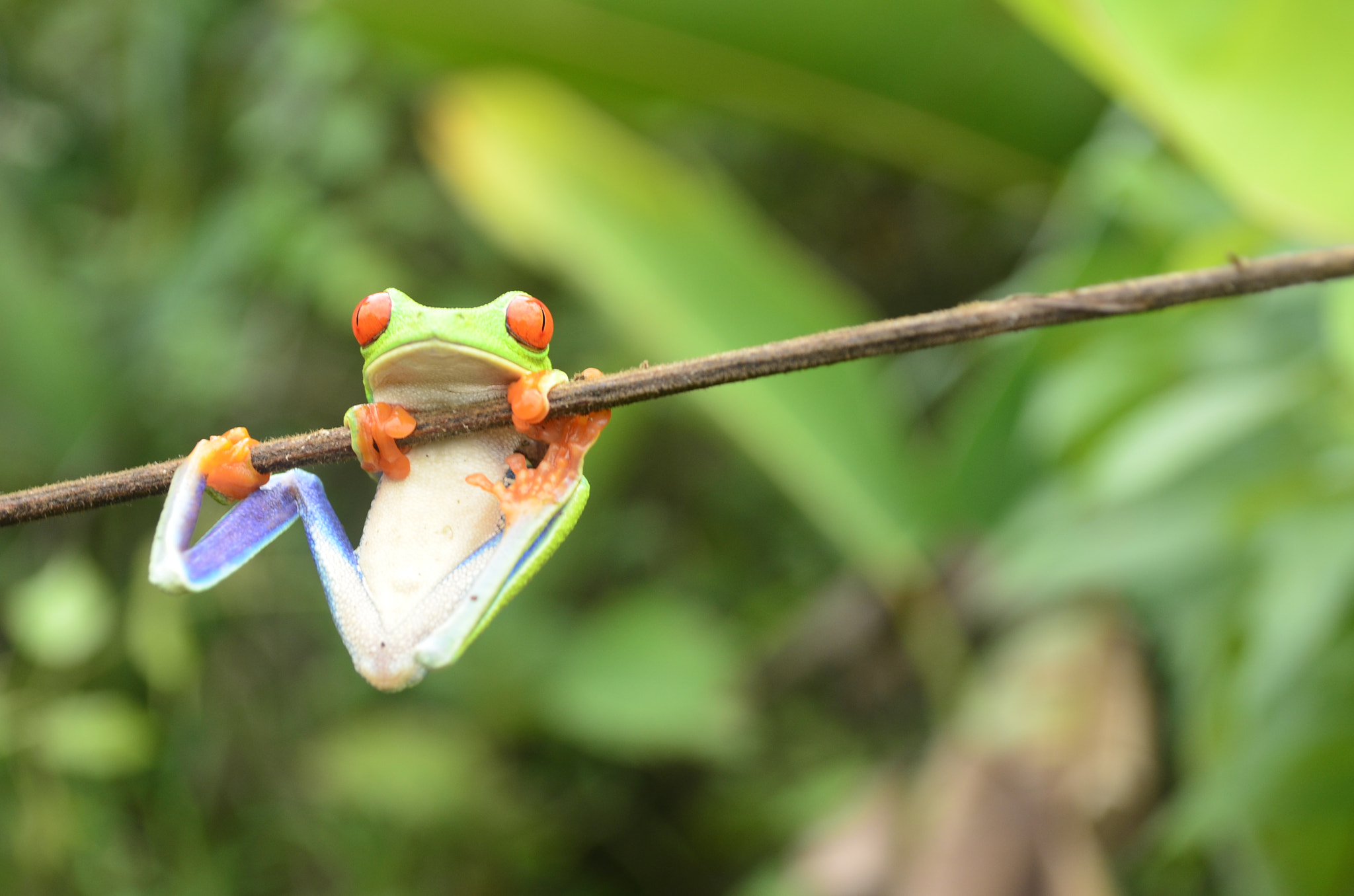 Photograph Hangin' around by Tanya George on 500px
