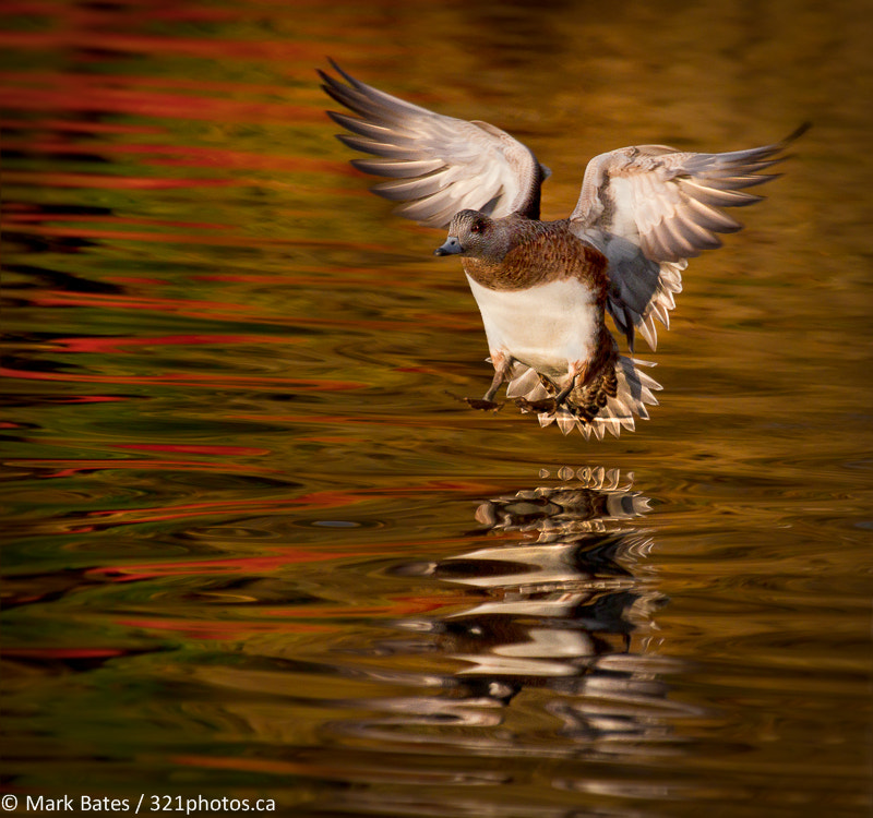 Photograph Fall Landing by Mark Bates on 500px