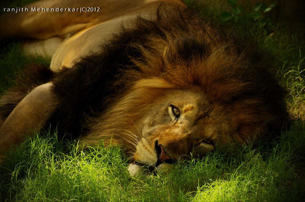 Photograph Majesty at rest by Ranjith Mehenderkar on 500px