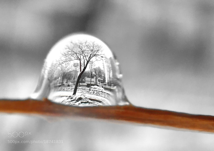 Photograph winter drop by tugba kiper on 500px