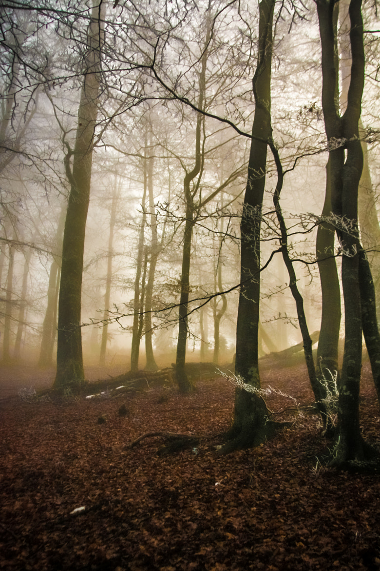 Photograph Forest Fog by Alexandru Vlad on 500px
