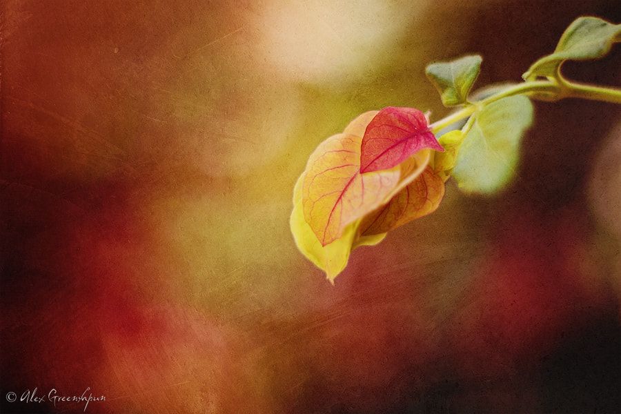 Photograph Autumn's Blossoms by Alex Greenshpun on 500px