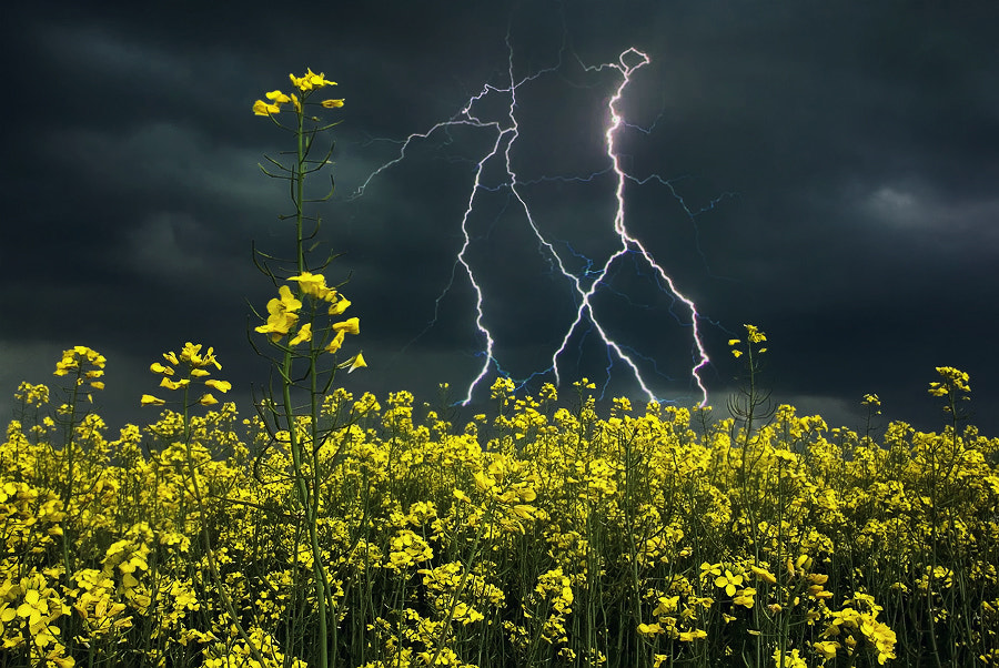 Photograph Storm in the rapeseed field by Silvia Georgieva on 500px