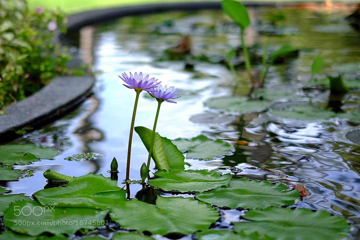 Photograph @My garden #4 by Diep Nguyen on 500px