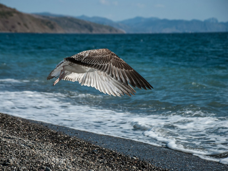 Photograph Seagull by Elena Klimanova on 500px
