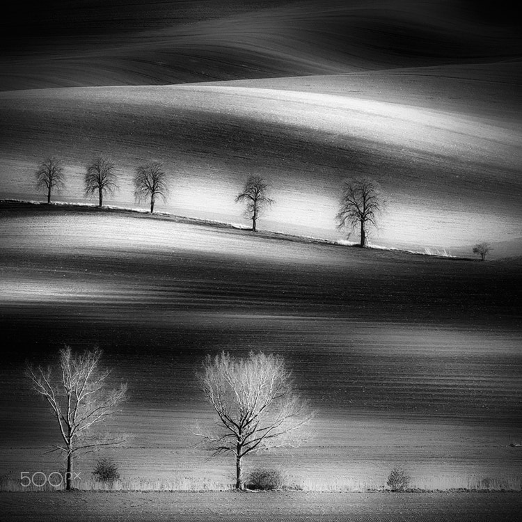 Photograph moravian trees by Piotr Krol on 500px