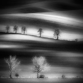moravian trees by Piotr Krol (PiotrKrol_Bax)) on 500px.com