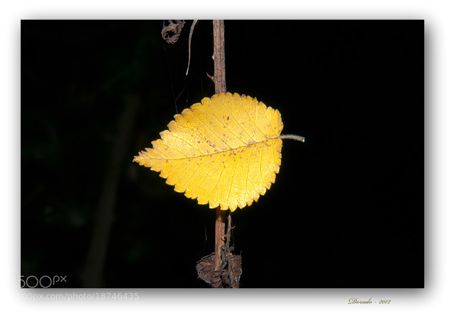 Photograph Autumn magic LII by Juan Dorado on 500px