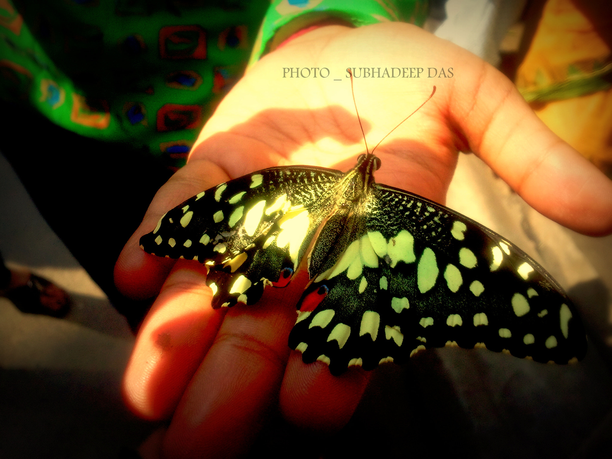 Photograph BUTTERFLY ON HAND :) :)  MOBILE CAPTURE  by SUBHA   on 500px