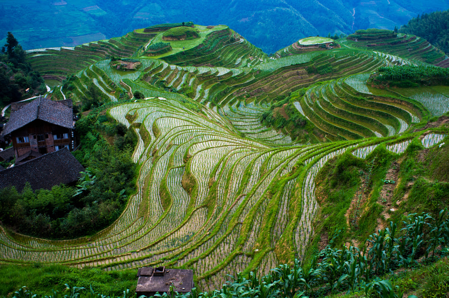 rice terraces in longji, china by Severin Stalder on 500px.com
