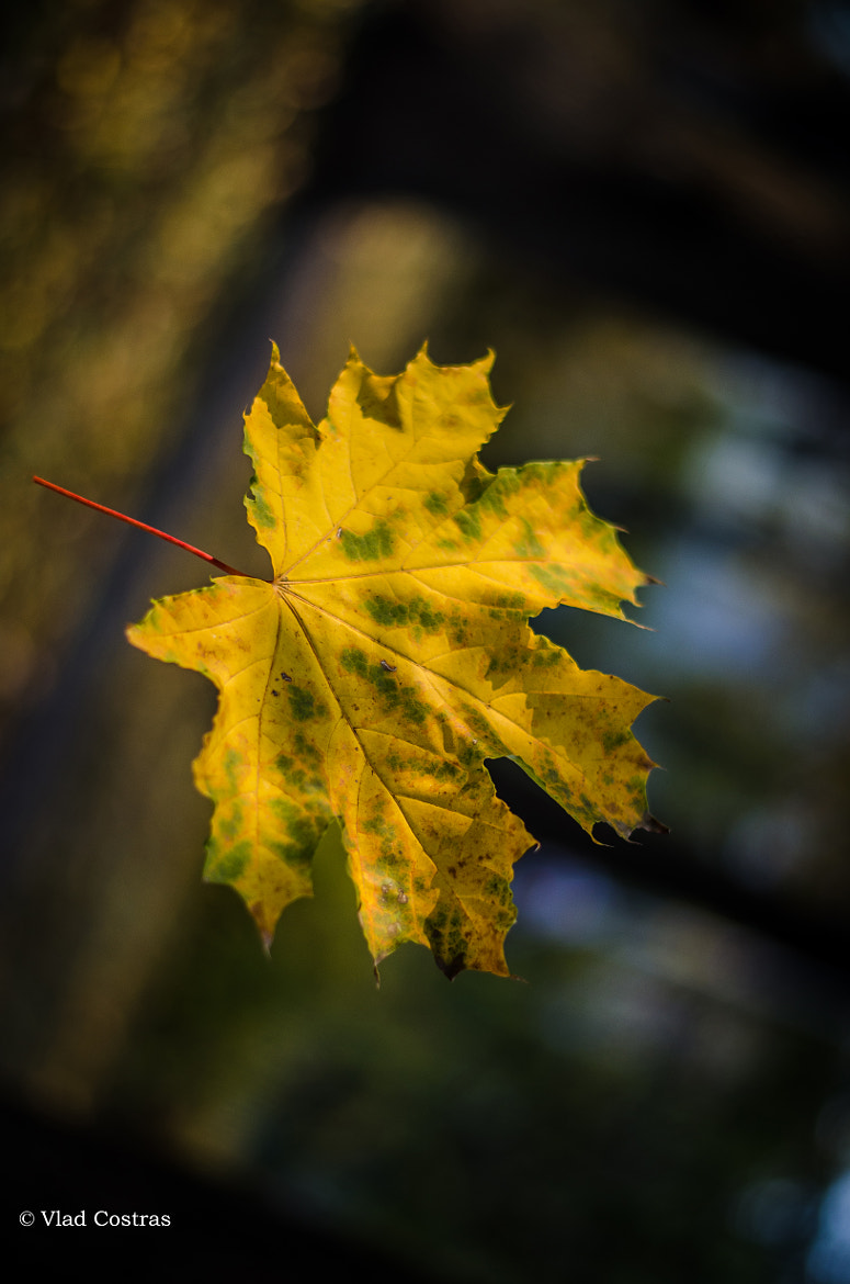 Photograph Flying leaf... by Vlad Costras on 500px