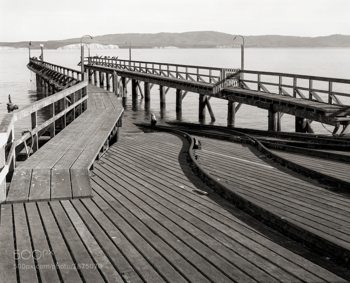 Photograph Sea Lion, Old Lifeboat Station, Drake's Bay, Point Reyes by Austin Granger on 500px