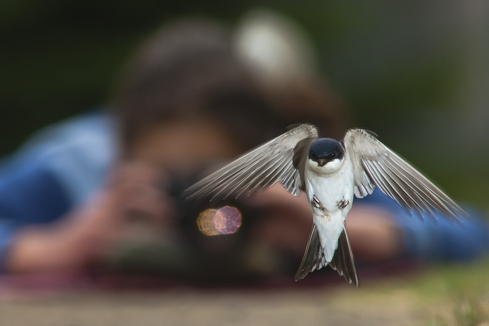 Photograph swallow and the girl by Tibor Jakab on 500px