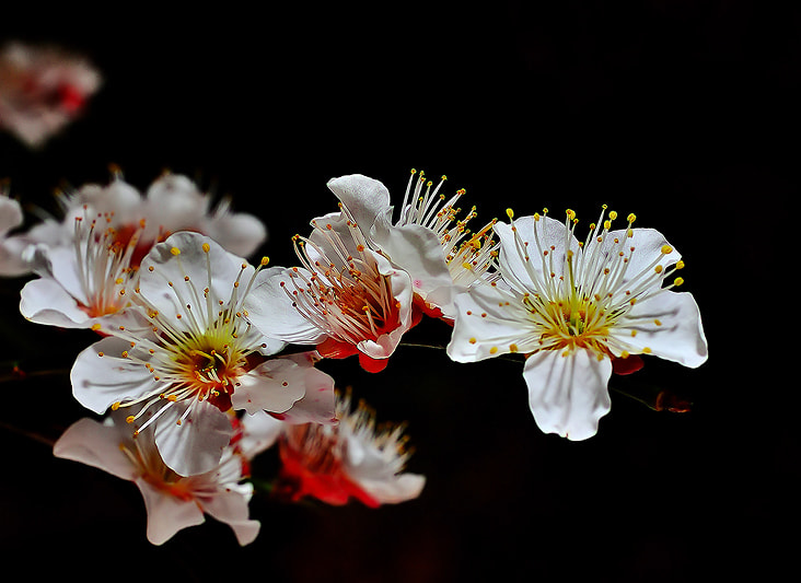 Photograph ...UME... by Bu Balus on 500px