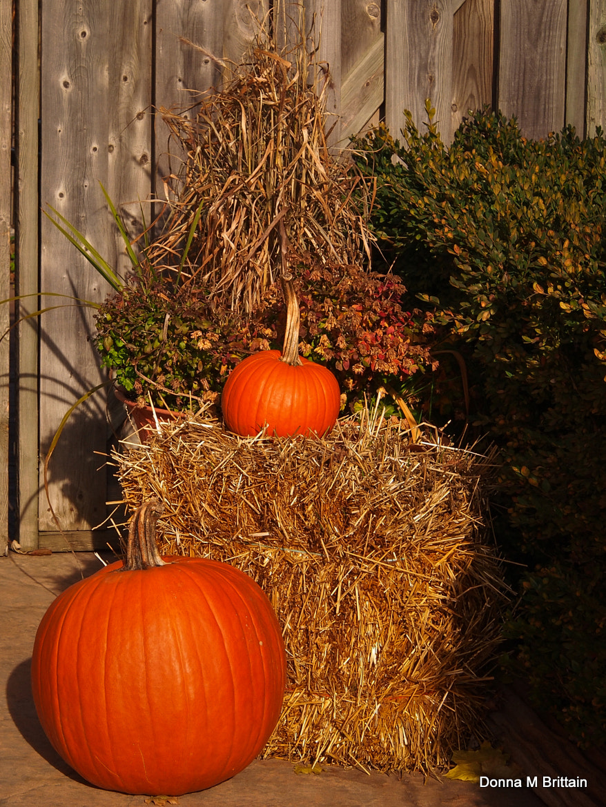 Photograph Happy Thanksgiving to the USA by Donna Brittain on 500px