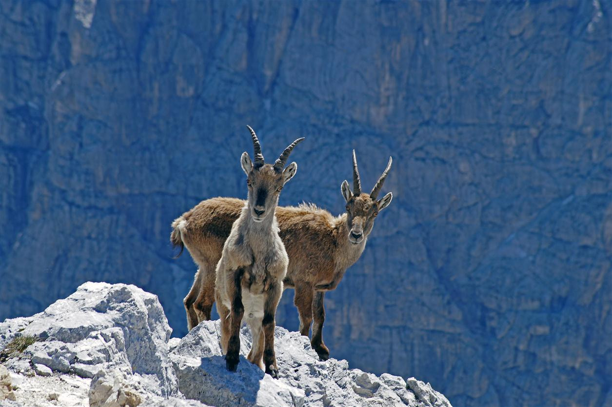 Photograph He - goat brothers by Edvard - Badri Storman on 500px