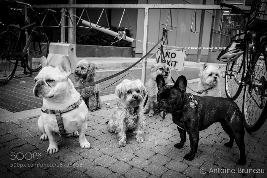 Photograph Stay Pawsitive by Antoine BRUNEAU on 500px