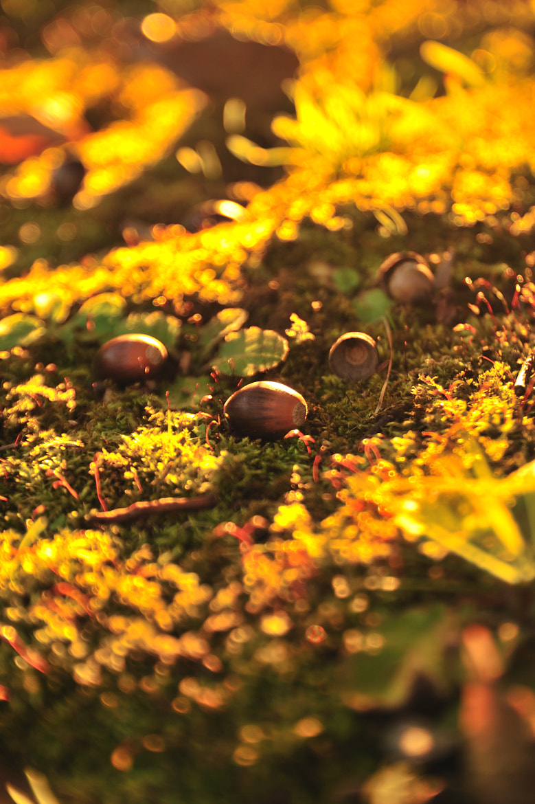 Photograph Golden Autumn... by Chihiro Imahashi on 500px