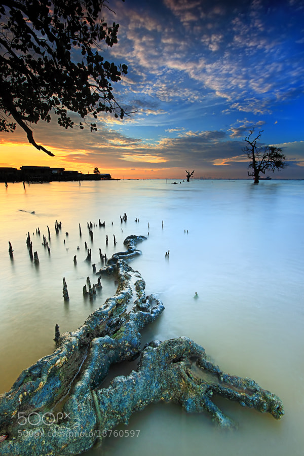 Photograph akar menjalar by Danis Suma Wijaya on 500px