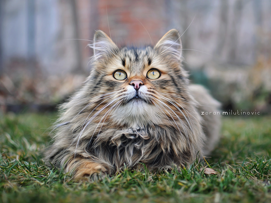 Photograph Is it a bird? Is it a plane? It's a Fluffy! by Zoran Milutinovic on 500px