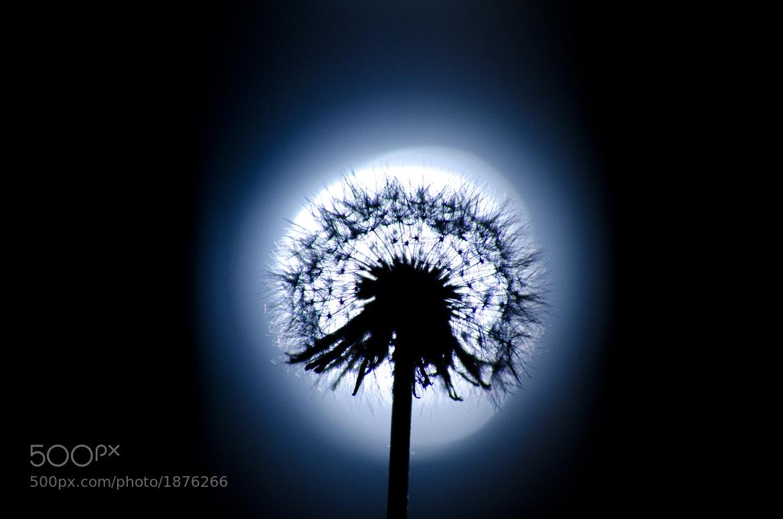Photograph Nightblue  by Roland Schanz on 500px