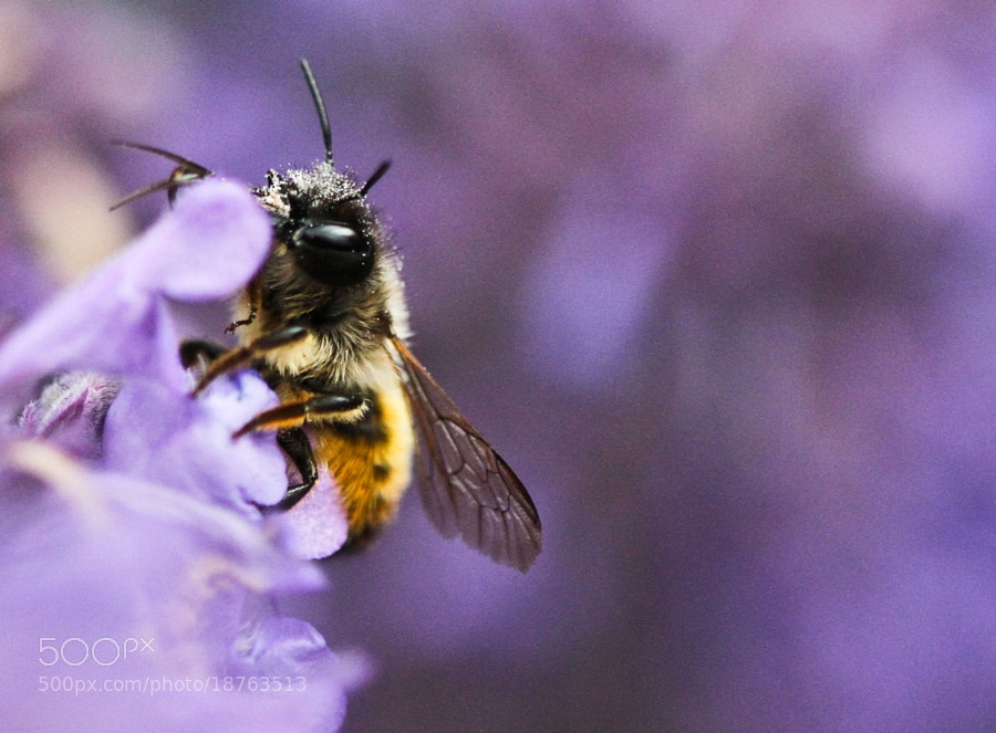 Photograph My first bee  by Yvonne Postma on 500px