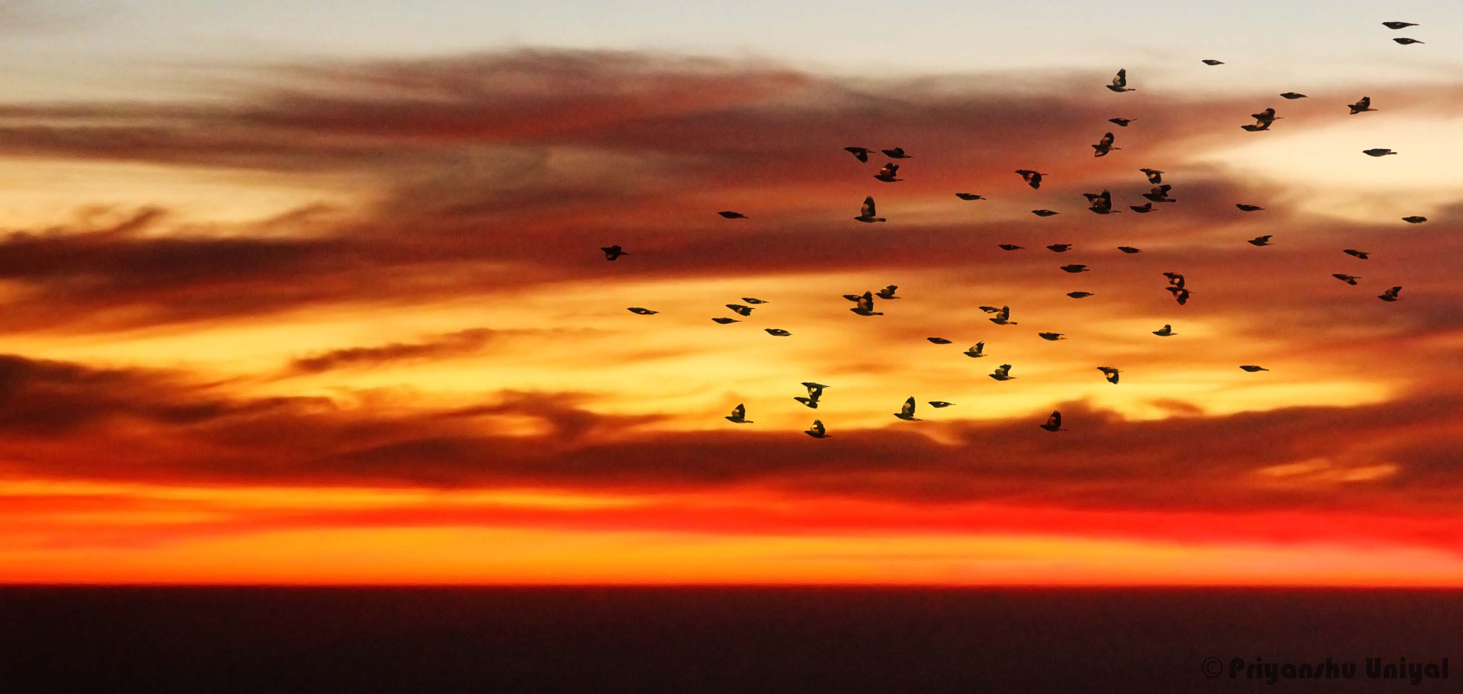Photograph Flying Home by Priyanshu Uniyal on 500px